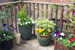 flowers on decking
